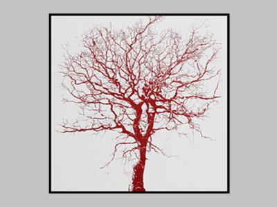 Litografia Oak II