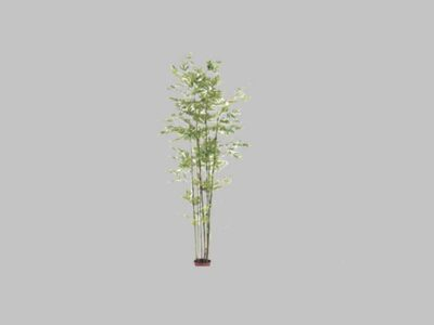 Arbol Bamboo 7′
