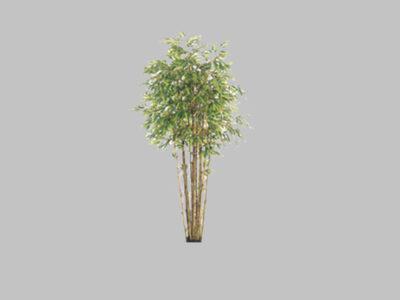 Arbol Bamboo Con Tronco Natural 7′