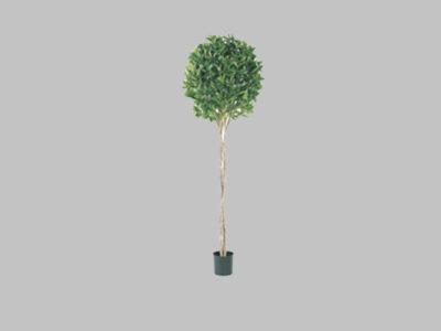Arbol Bayleaf Topiary 6′