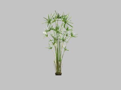 Arbol Cypress Grass 5′