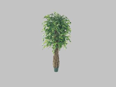 Arbol New Ficus 6′