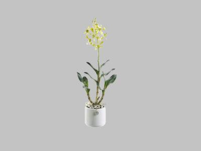 Arreglo Floral Ceasar Orquidea