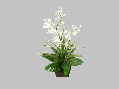 Arreglo Floral Cymbidium Orquidea Blanca
