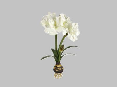 Flor Amaryllis Con Bulbo